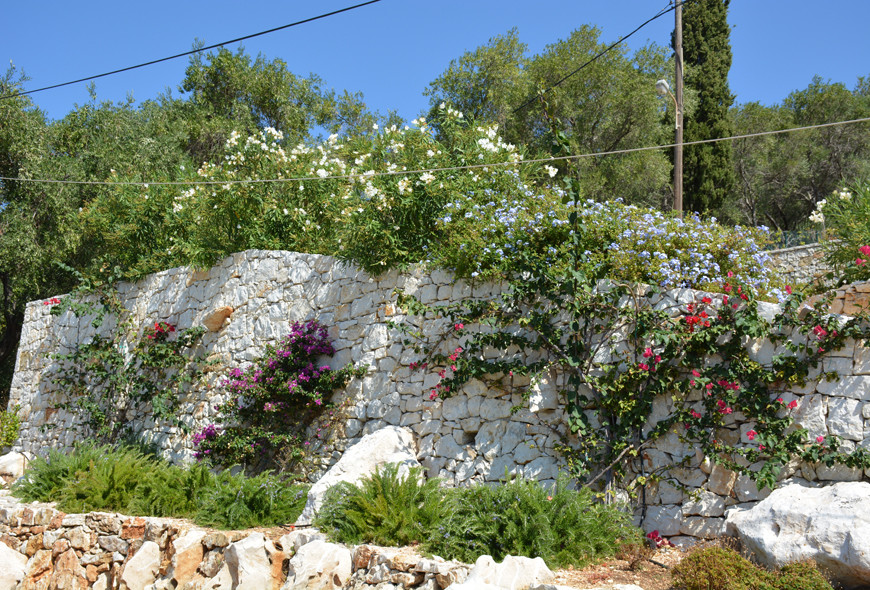 Kassiopi Healand Flowers Corfu Greece