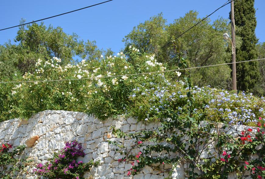 Colourful Flowers Headland Kassiopi Corfu